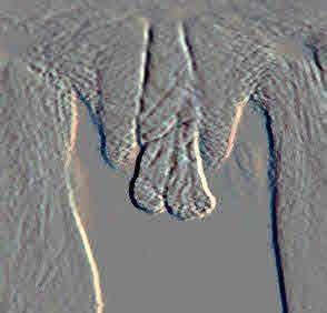 عکس واقعی رنگی از اناتومی دستگاه تناسلی زن بدون سانسور عکس وازن زن عکس کوس زن عکس کس زن عکس رنگی از رحم عکس اندام های جنسی تناسلی زن عکس آناتومی دستگاه تناسلی زنان