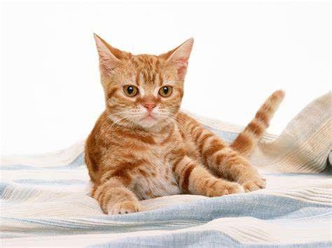 دانلود فیلم و کلیپ ترساندن گربه فیلم ترساندن گربه راه و روش های ترساندن گربه ترساندن گربه در خواب ترساندن گربه تا حد مرگ ترساندن گربه با صدا